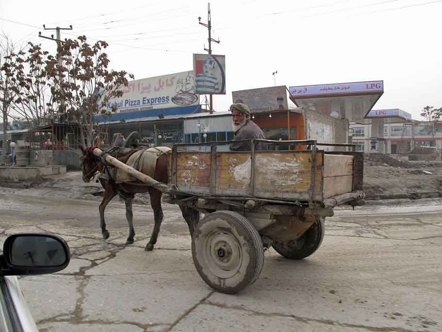 Donkey cart on road
