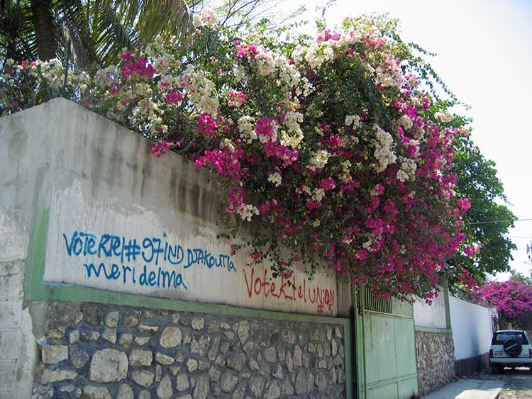 Bougainvillea in Haiti