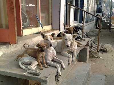 Dogs laying on sidewalk
