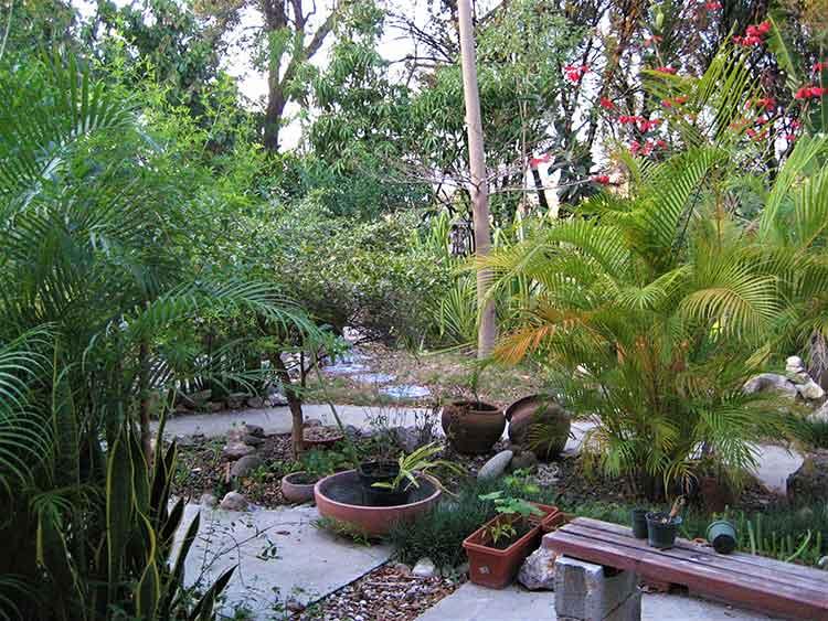 Garden in Haiti