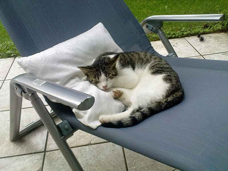 Cat in lounge chair