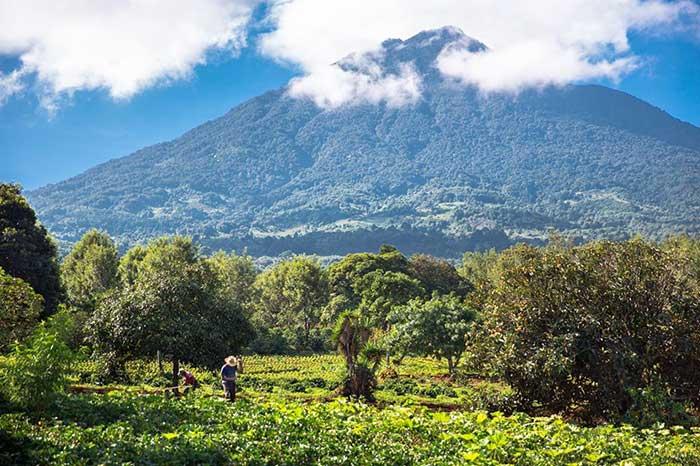 Coffee farm on mountain