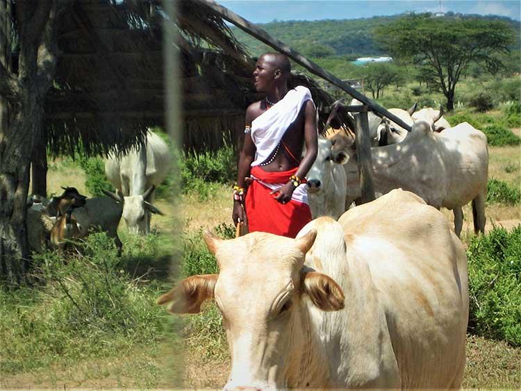 Massai tribesman