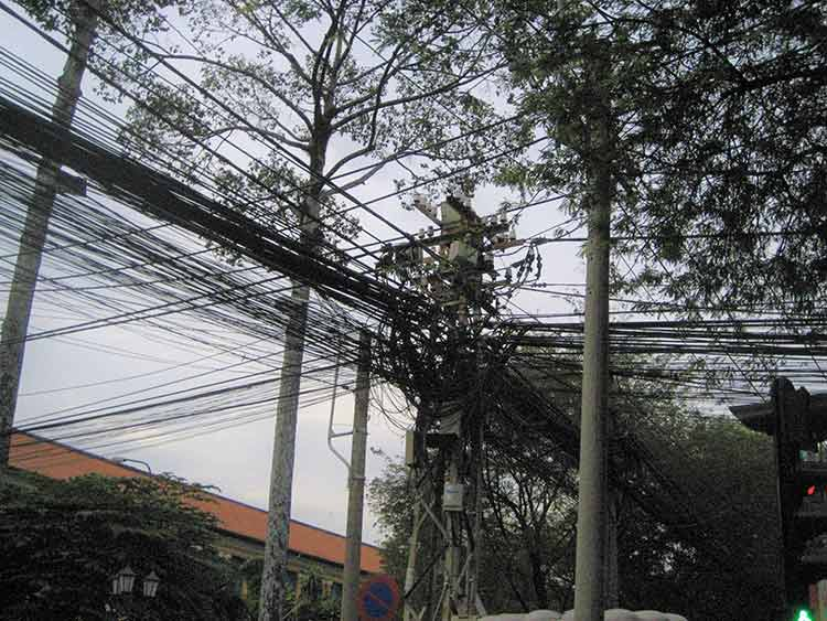 Electrical wires in trees
