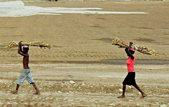 Carrying sugar cane