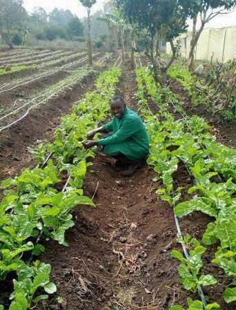 Mwanzia working in garden