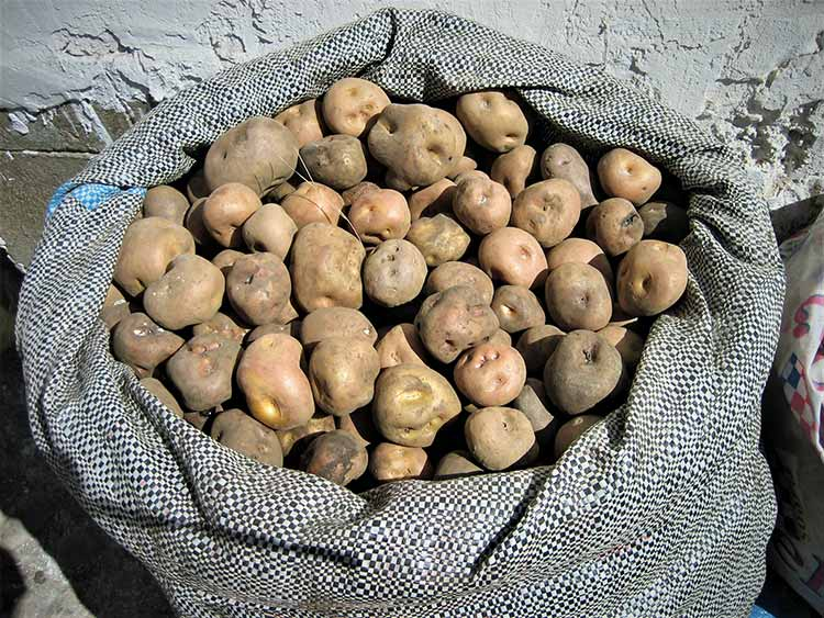 Selling potatoes
