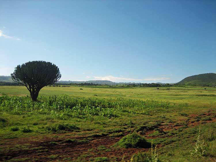 Grasslands in Kenya