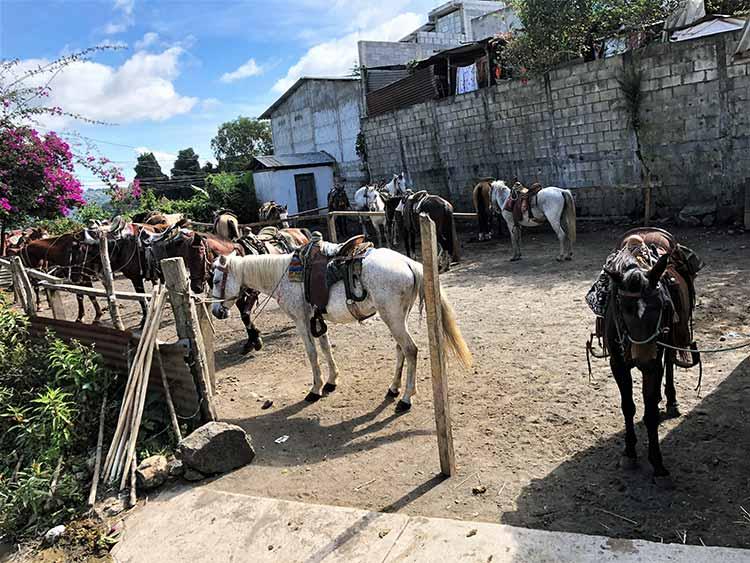 Horses for climbing volcano