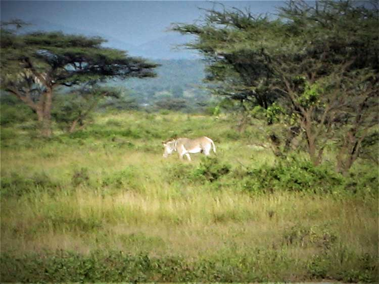 Wildlife in the Kenyan Savannah